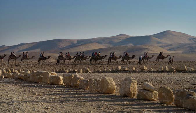 bedouin-camels-s